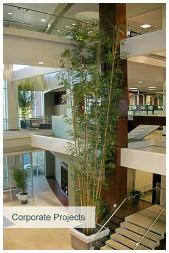Indoor artificial plant - corporate setting